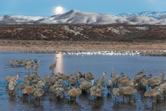 Sandhill-cranes-and-setting-moon-1d