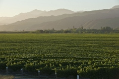 Marlborough wine country 1h