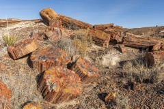 Petrified Forest petrified trees